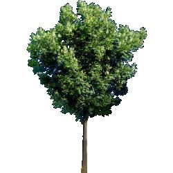 Cutout Tree 34