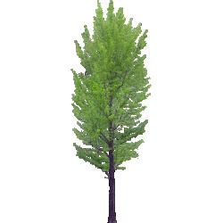 Cutout Tree 36