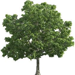 Cutout Tree 38