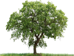 Cutout Tree 39