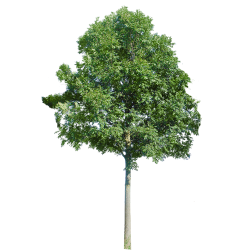 Cutout Tree 42