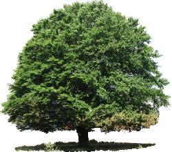 Cutout Tree 43