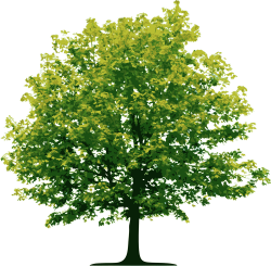 Cutout Tree 45