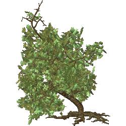 Cutout Tree 46