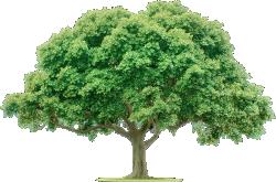 Cutout Tree 48