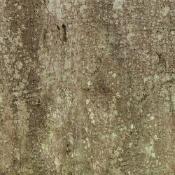 Tree Trunk Texture 3