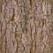 Bark 10b3D View