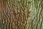 Bark 163D View