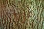 Bark 16Front