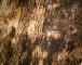 Bark 183D View