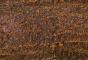 Bark 193D View