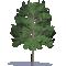 Acacia hardwood3D View