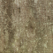 Tree Trunk Texture 3PREVIEW