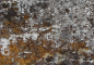 Concrete Mossy 1PREVIEW