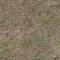 Ground GrassPREVIEW