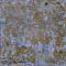 Wall Wallpaper Yellow WhitePREVIEW